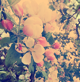 frontpage_summerflowers-e1462189439957